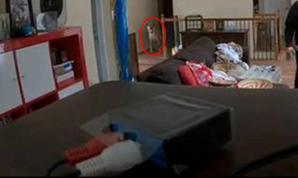 Dog-in-corner2